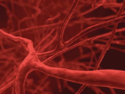 Реоэнцефалография головного мозга